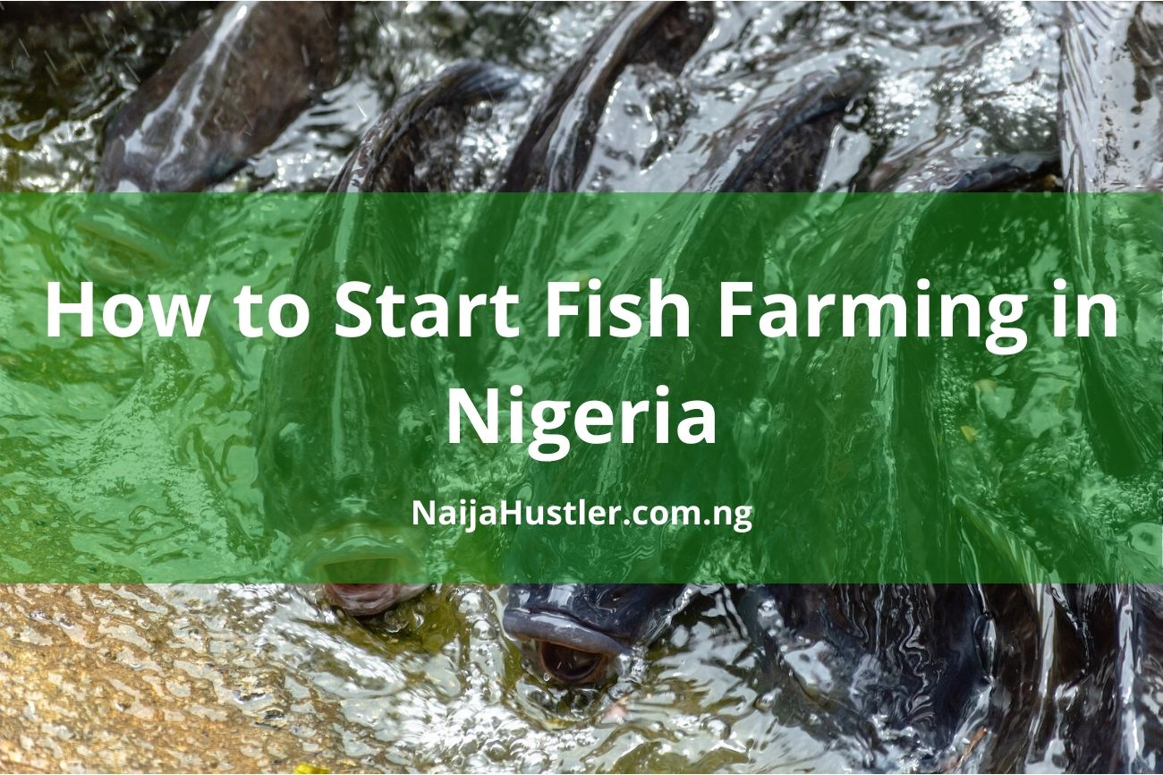 How to Start a Fish Farming in Nigeria